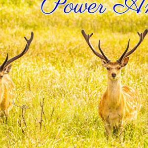 *パワーアニマル(Power Animal)*エンジェルセラピーオラクルカードより、今週のエンジェルメッセージ(Dec.9)