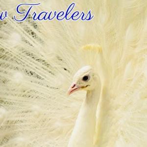*旅の仲間(Fellow Travelers)*セイクレッドトラベラーオラクルカードより、今日のエンジェルメッセージ(Jan.21)