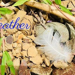*羽根(Feather)*アセンションカードより、今日のエンジェルメッセージ(Jan.23)