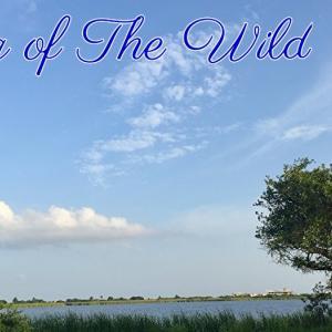 *荒野の歌(Song of the Wild)*ネイティブスピリットオラクルカードより、今日のエンジェルメッセージ(May 25)