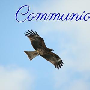 *イーグル:霊的交流(Communion)*アースマジックオラクルカードより、今日のエンジェルメッセージ(May 31)