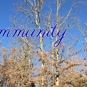 *太古の森:コミュニティ(Community)*セイクレッドデスティニーオラクルより、今日のエンジェルメッセージ(Jul.29)