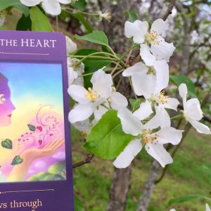 *ハートの旅(Voyage of the Heart)*セイクレッドトラベラーオラクルカードより、今週のエンジェルメッセージ(Apr.12)