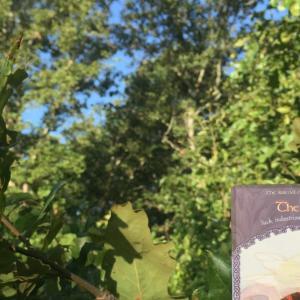 *ミツバチ(The Bee)*伝説の王国オラクルカードより、今週のエンジェルメッセージ(Aug.30)