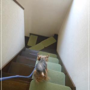 階段をおりる♪