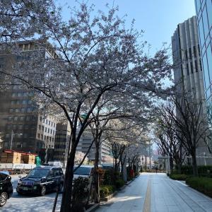 桜と心強いひとことに癒されるわたくし