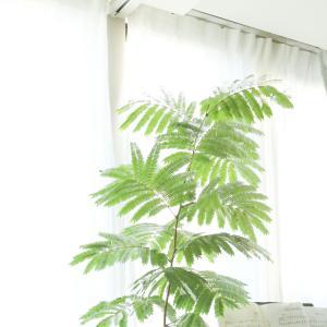 狭い部屋に大きな観葉植物を置きたい!そんな場合にオススメの植物、オススメじゃない植物
