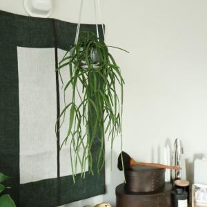 天井から植物をハンギングするときに使っているフック