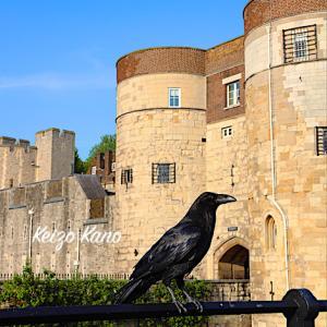 ロンドン塔には、カラスが似合う----ロンドン