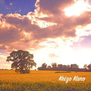 菜の花畑と雲と光