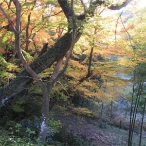天野山の紅葉