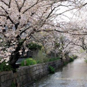 大阪みどりの百選 玉串川の桜 2019