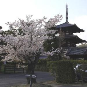 春の斑鳩 法輪寺 法起寺と西の京 薬師寺巡り