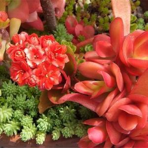 多肉植物 可憐な花が咲く