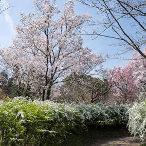 植物園の春を満喫