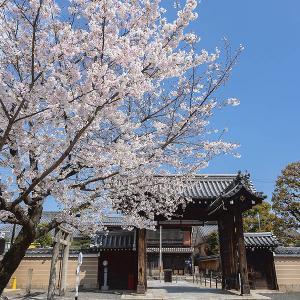 桜咲く 壬生寺、神泉苑から平安神宮へ