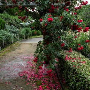 植物園 2020年6月
