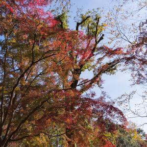 晩秋の京都府立植物園 -1-
