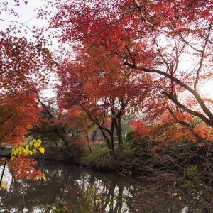 晩秋の京都府立植物園 -2-