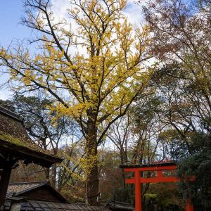 糺の森・河合神社の紅葉