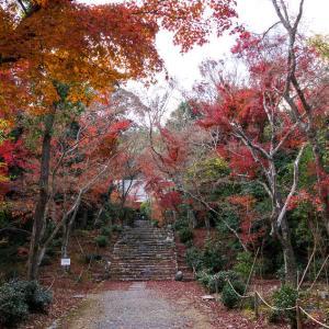 紅葉 浄住寺から地蔵院へ