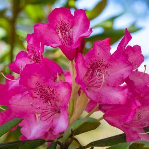 晩春・初夏の花々