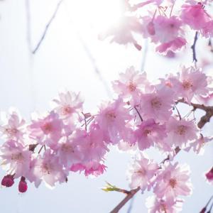 春の嵐山 1