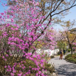 春の嵐山 2