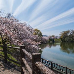 春の大和郡山城散策