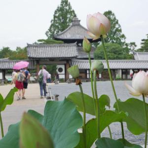 夏の東福寺