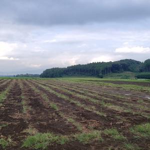 石川早生収穫完了!2021