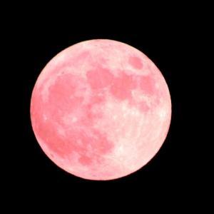 【恋愛成就】見ると幸せになる4月の満月『ピンクムーン』