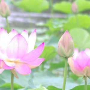 【開運☆春のお彼岸】春分を含む心身調整の大事な期間☆お彼岸の由来と開運する過ごし方☆