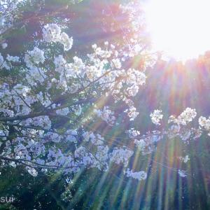 【春分☆占星術】春分の日の天体たちの語らい☆
