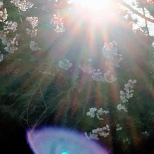 【最上の開運日☆天赦日】一粒万倍日と寅の日も重なる超大吉日☆