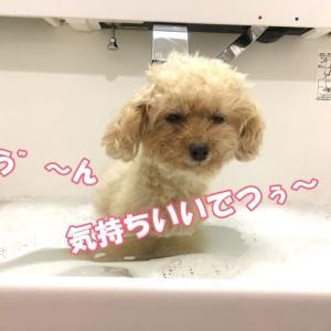お風呂でつよ(*^^*)