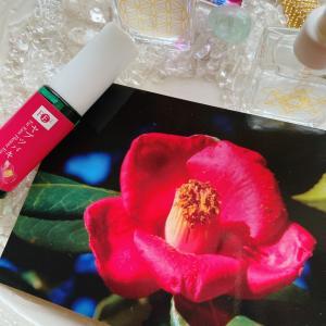 このブログをみた時がタイミング!お花からのメッセージ