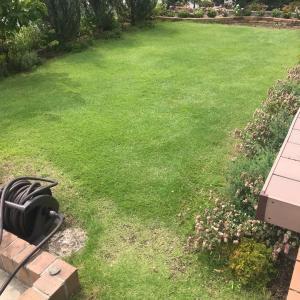 ガーデニング 芝刈り