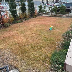 芝生と雪囲い