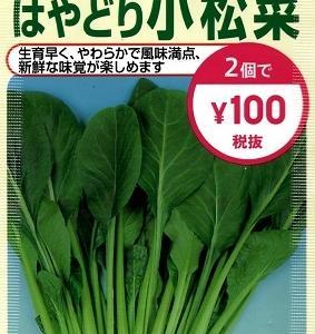 水耕栽培 はやどり小松菜 ―種まきから収穫―1―
