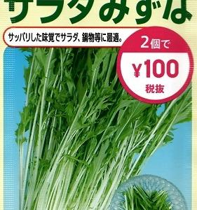 水耕栽培 ―久々にサラダ水菜―
