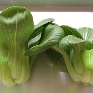 水耕栽培 はやどりチンゲン菜 ―残りの2株を収穫。一株の葉の枚数を数えてみました―