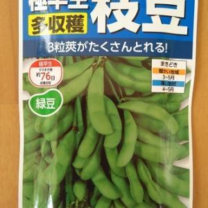 水耕栽培 極早生枝豆天ヶ峰 ―種まきから2週間・定植―