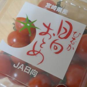 3年半かかってようやくご紹介 ―種採りミニトマトの品種―