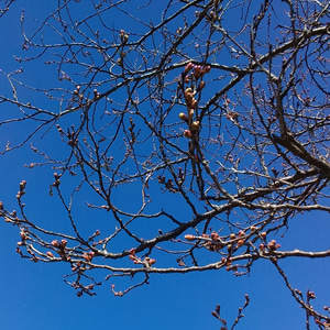 春を感じる聖なる動物