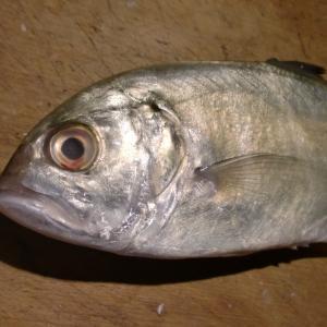 寒さが魚に脂をのせてくれてます