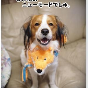 モードな犬。