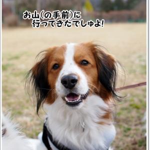 今年も会えたね、戸川公園の河津桜!
