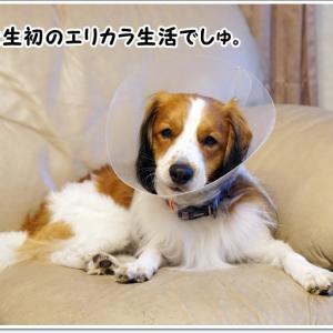 テオ、負傷。