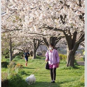 お花見の楽しみは・・・@引地川親水公園
